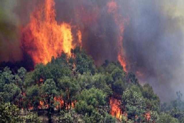 Zjarr i madh në parkun kombëtar të Qafshtamës