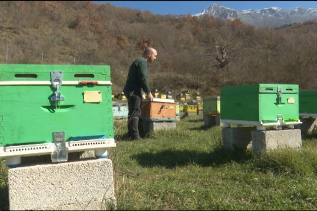Sezoni i bletërritësve , shtohet kujdesi në qarkun e Gjirokastrës.