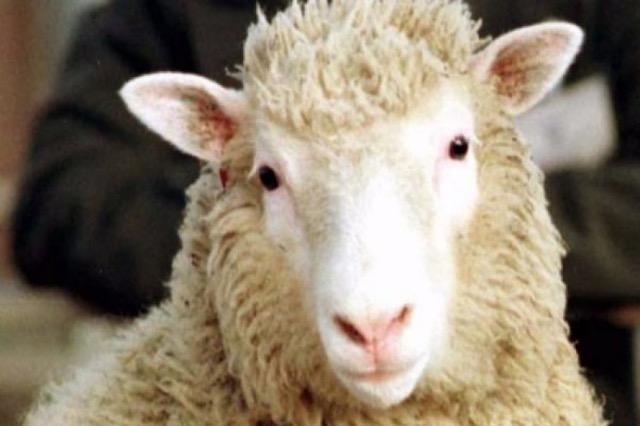 Si u bë klonimi i deles Dolly?