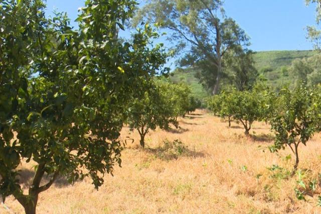 Delvinë, në fshatin Stjar shtohen sipërfaqet e mbjella me frutikultura