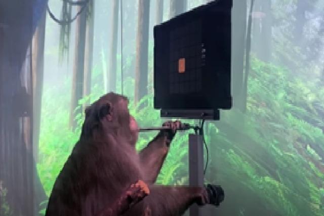 """Elon Musk sjell eksperimentin më të ri në teknologji, me majmunin """"Pagar"""""""