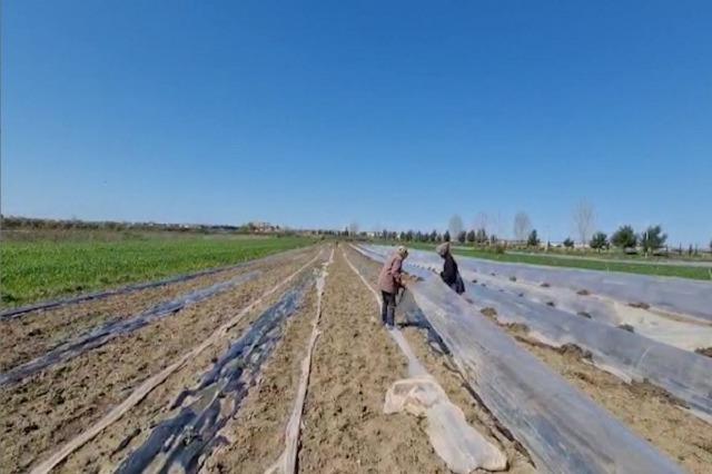Divjakë, fermerët të shqetësuar për prodhimin, shkak moti i ftohtë