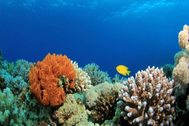 Ndryshmi i klimës: Të shohësh një pasuri koralore teksa zhduket
