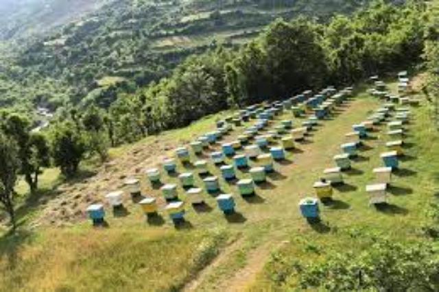 Skema Kombëtare, 613 fermerë më shumë se vitin e kaluar aplikuan për mbarështimin e bletarisë