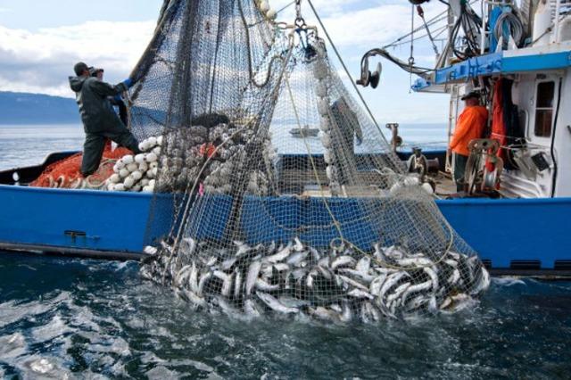 Peshkimi, sektori me rritjen më të shpejtë