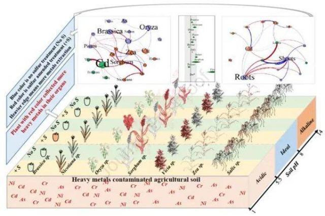 Zbulimi : Ndryshimet e squfurit mund të zbusin ndotjen e tokës