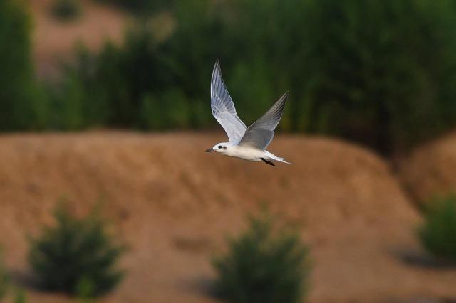 Zogjtë shtegëtarë mbërrijnë në verilindje të Kinës