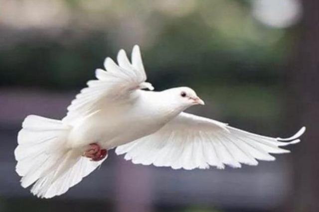 Dita Ndërkombëtare e Paqes, politika mesazhe