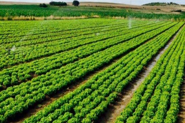 Sektorët prioritarë në bujqësi, program subvencionimi për 5 vjet